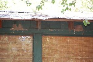 Black phoebe location showing evidence of three nests.