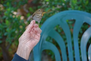 A bird on the hand is worth two in the bush... or something like that.
